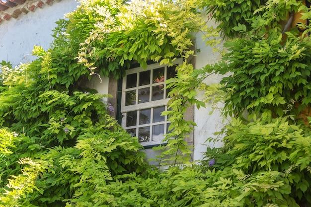Oud portugees raam, begroeid met gebladerte. portugal