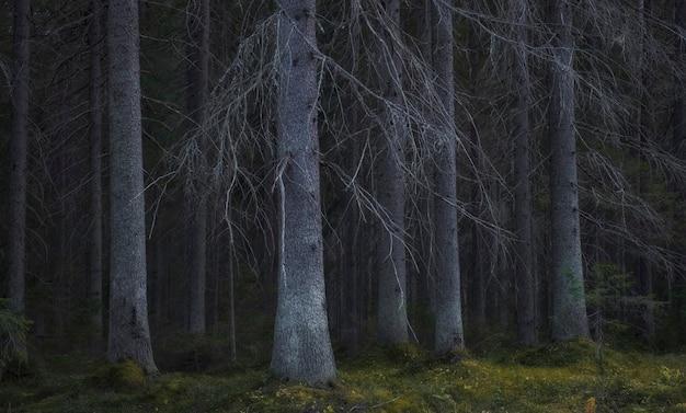 Oud somber naakt sprookjesbos in de herfst