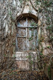 Oud venster bedekt door vegetatie