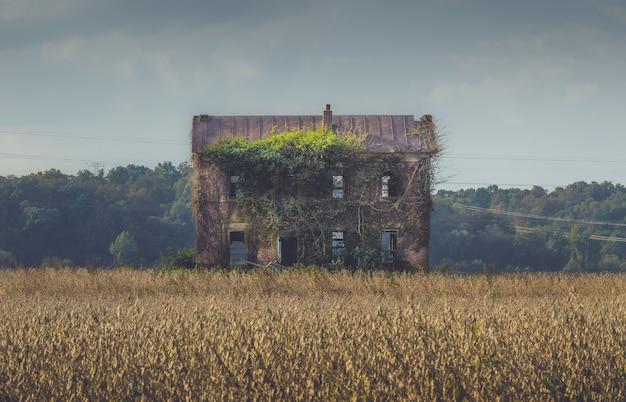 Oud verlaten gebouw overwoekerd door lange wijnstokken in het midden van een veld