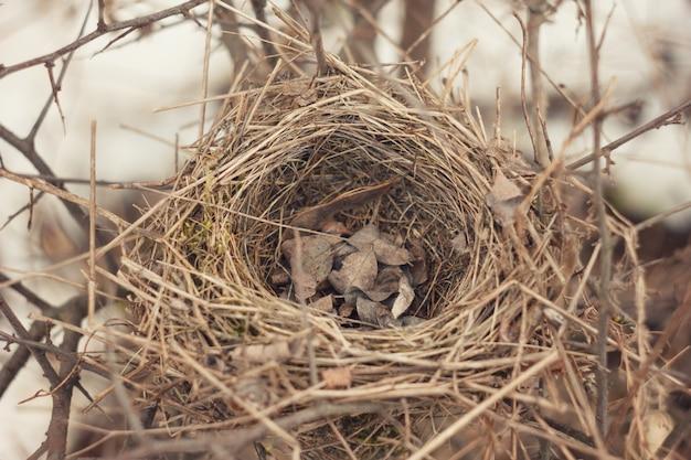 Oud verlaten nest van wilde vogels. het oude kopnest van een kleine musvogel in de vroege lente