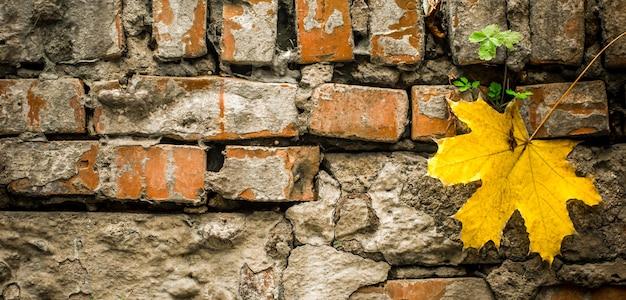 Oude bakstenen met een geel herfstblad