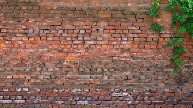 Oude bakstenen muur als achtergrond met takken en bladeren erop.