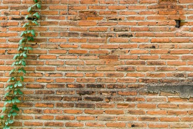 Oude bakstenen muurachtergrond die in klimopinstallatie wordt behandeld met ruimte.