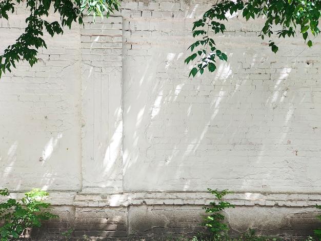 Oude bakstenen witte muur met groene bladeren en planten, zonlicht met schaduwen