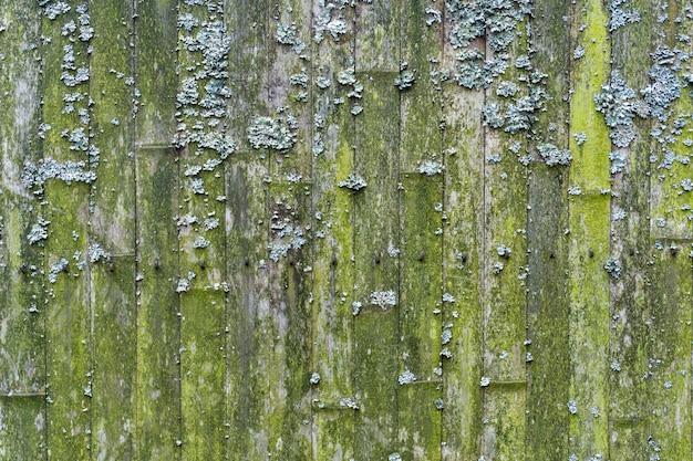 Oude bamboe achtergrond. muur of schutting gemaakt van oud bamboe. textuur van oud hout met mos en schimmel