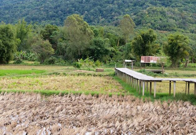 Oude bamboe geweven brug langs het rijstveld na de oogst in de buurt van de berg op het platteland van thailand