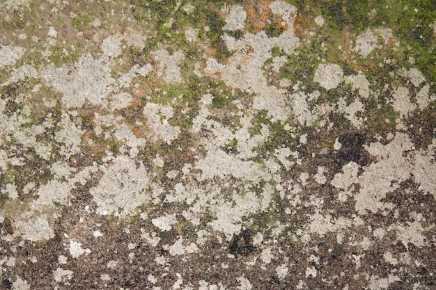 Oude beschimmelde en verwaarloosde muur