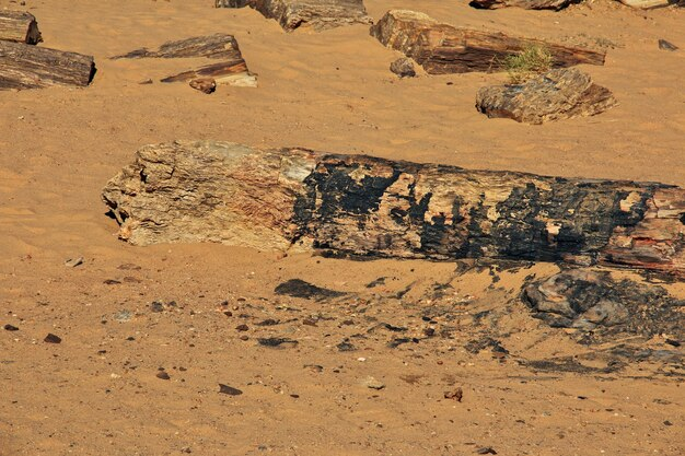 Oude bomen in de saharawoestijn, soedan