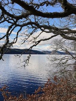 Oude boom aan het meer. oude eik op de achtergrond van het meer. blauw water. loch ness