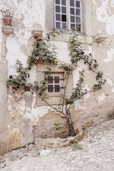 Oude boom groeit in een gebarsten muur