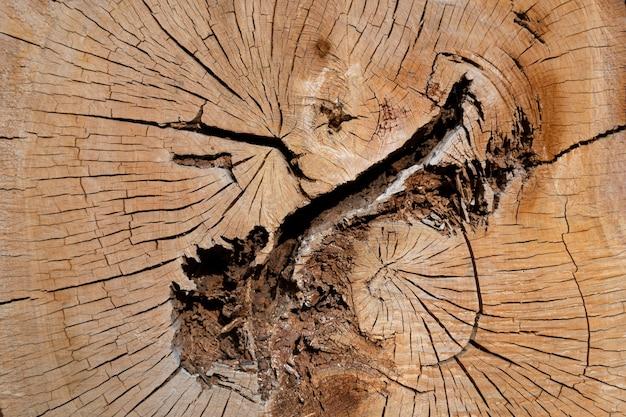 Oude boom in het midden gesneden textuur