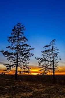 Oude boom tegen de hemel met zonsondergang