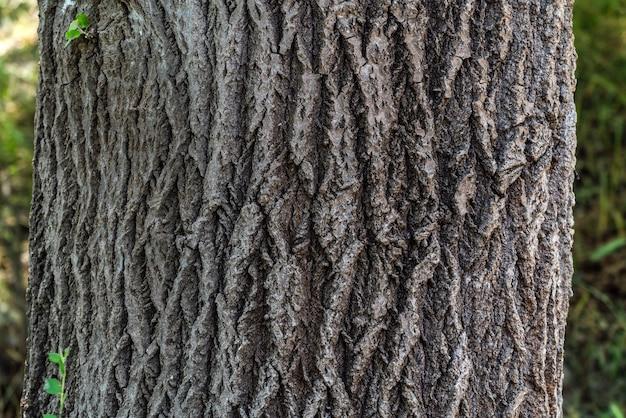 Oude boomschors textuur achtergrond