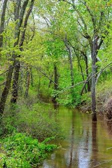 Oude boomstammen in een overstroomde vallei na zware regen die zeer toont