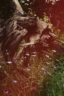 Oude boomstronk in het bos, oud houten addertje onder het gras in de buurt van het bos