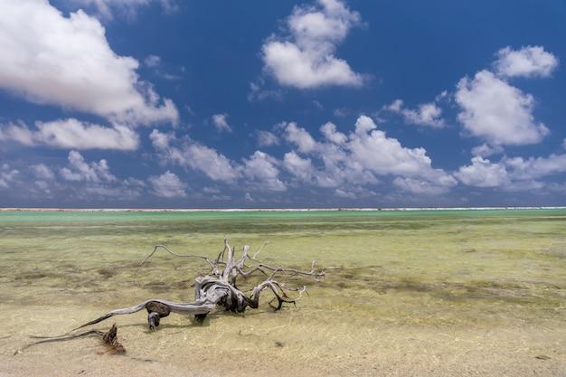 Oude boomtak links op het strand in zoutpannen. bonaire, caraïben