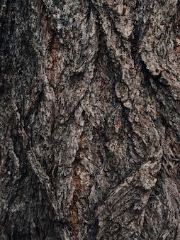 Oude bruine gebarsten houtschors. boomstam. natuurlijk patroon. oppervlakte van populierboomschors. natuurdecor voor presentatie van natuurlijke cosmetica of parfum. abstracte donkere aardachtergrond. zachte focus.