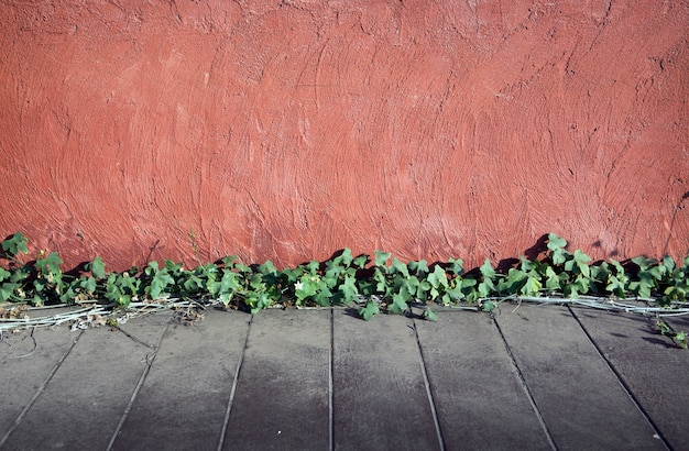 Oude cement en houten vloer met klimop