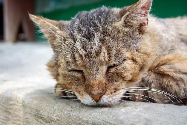 Oude dakloze kat met littekens in slaap op de weg