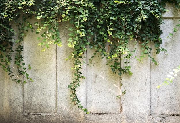Oude de bouwdetails met groene klimop