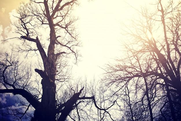 Oude dode bomen over hemel.