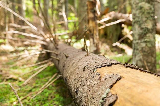 Oude droge boom