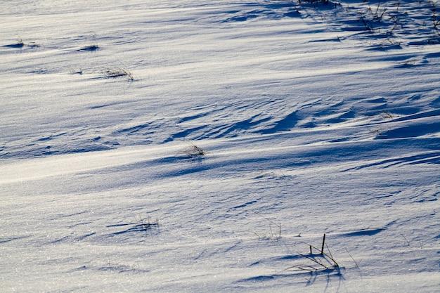 Oude droge en bevroren winterplanten op het veld, wintervorst in het koude seizoen