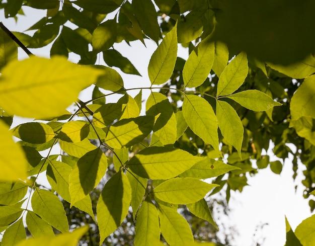 Oude droging in de herfst en het veranderen van de kleur van het gebladerte van bomen in het herfstseizoen, details van bomen