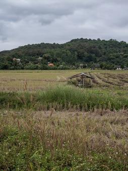 Oude gebroken hut op het padiegebied na de oogsttijd.