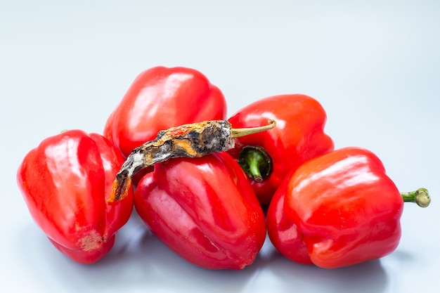 Oude gedroogde paprika's onder verse paprika op grijze ondergrond. concept van ouderdom en jeugd.