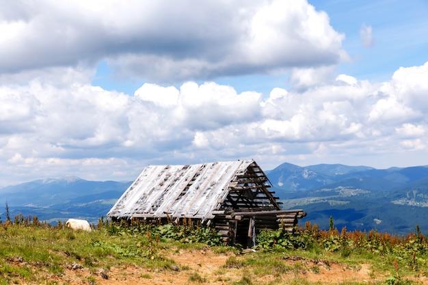 Oude geruïneerde houten schuur in de bergen en de koe
