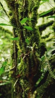 Oude groei gematigd regenwoud, georgische jungle - bomen in het mos