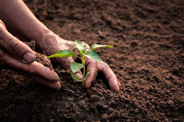 Oude hand aanplant spruit op de bodem.