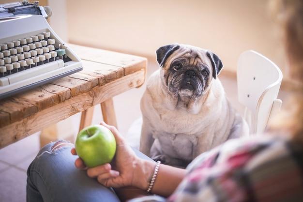 Oude hondmops ziet eruit alsof haar baasje klaar is om een groene appel te eten na het werk met een oude typemachine