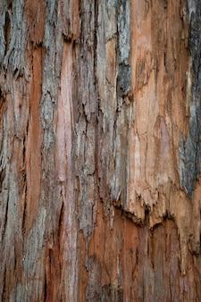 Oude hout gebarsten textuur, de stam van de boom, natuurlijke houten achtergrond, schors