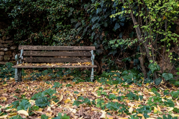 Oude houten bank in een tuin met gevallen bladeren in peratallada in catalonië