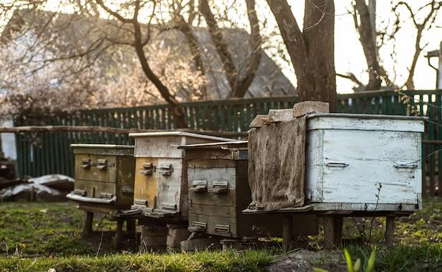 Oude houten bijenkorven op bijenstal onder kersenboom. bijenkorven bloeien ingesday in de lente. bloeiende kers met stuifmeel voor de ontwikkeling van bijen in april. bijenteelt. natuur, insecten. bijenteelt,