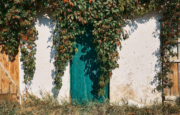 Oude houten blauwe deur in een oude muur met afbrokkelende gips, begroeid met wilde druiven
