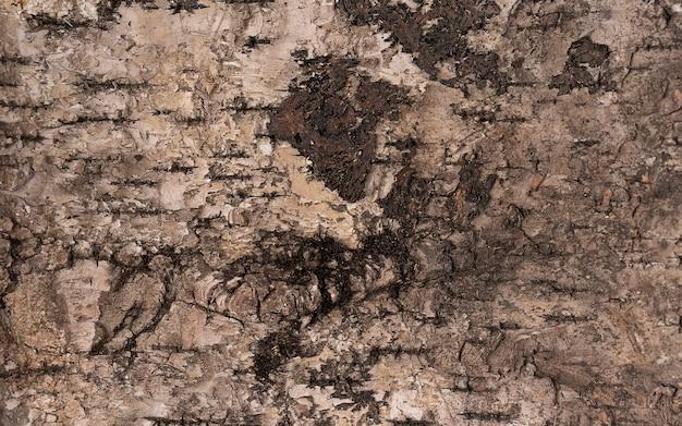Oude houten boom achtergrond oppervlakte natuurlijk patroon