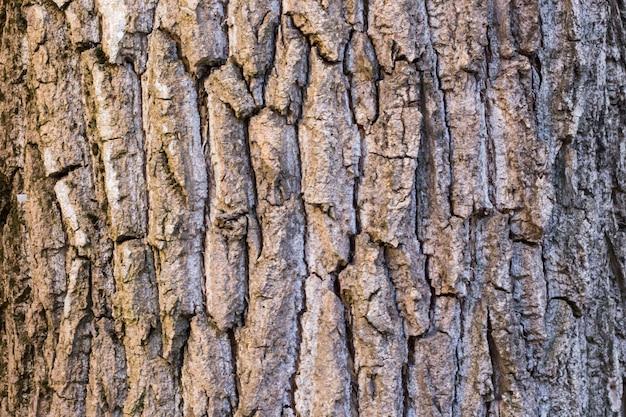 Oude houten boom op de achtergrond van de aardtextuur