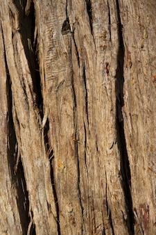 Oude houten boom textuur achtergrondpatroon, boomstam - achtergrond