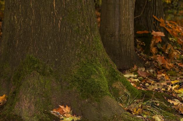 Oude houten boomkorst met groen mos. close-up shot