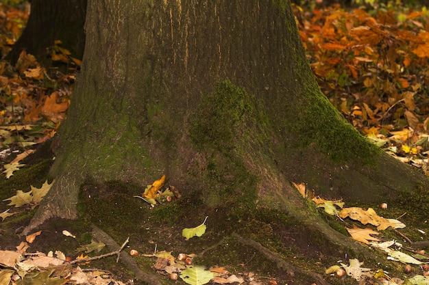 Oude houten boomschors met groen mos. close-up shot