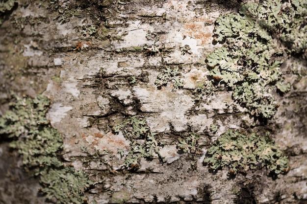 Oude houten de schorstextuur van de boomschors met mos.