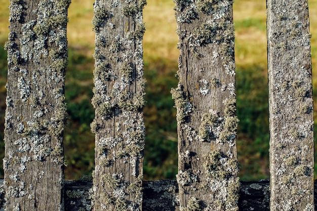 Oude houten hek bedekt met groen mos