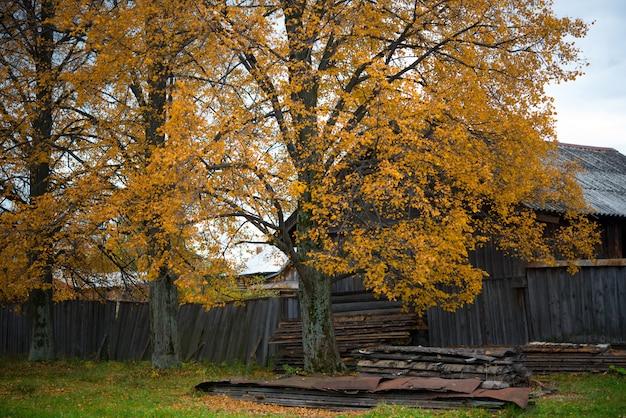 Oude houten huis in het dorp, berken, landschap van het platteland in de herfst