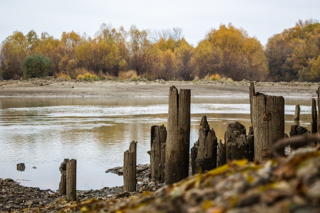 Oude houten palen van de vernietigde pier aan de kust. op de achtergrond staan herfstbomen