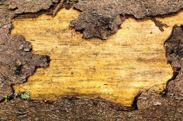 Oude houten textuur, bruine kleuren