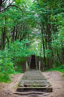 Oude houten trap in het bos van klaipeda, litouwen